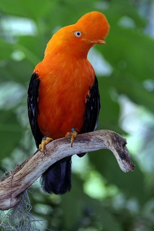 Die 45 prachtvollsten, schönsten und ungewöhnlichsten Vögel der Welt – Vogelbilder Galerie [+Videos] 17