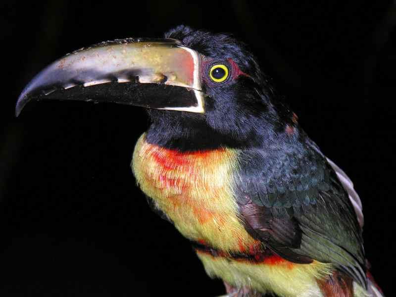 Die prachtvollsten, schönsten und ungewöhnlichsten Vögel der Welt – Vogelbilder Galerie [+Videos] 34