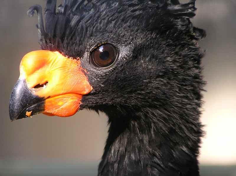 Die 45 prachtvollsten, schönsten und ungewöhnlichsten Vögel der Welt – Vogelbilder Galerie [+Videos] 28
