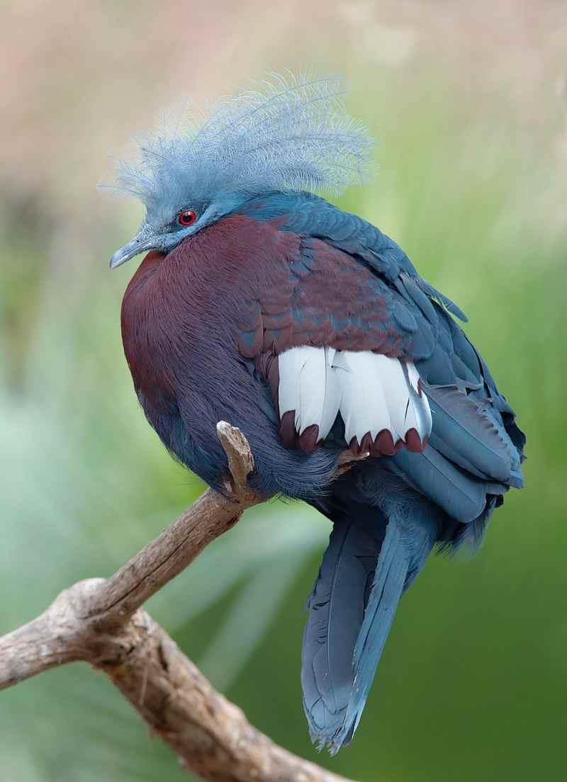 Die prachtvollsten, schönsten und ungewöhnlichsten Vögel der Welt – Vogelbilder Galerie [+Videos] 3
