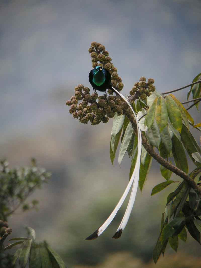 Die 45 prachtvollsten, schönsten und ungewöhnlichsten Vögel der Welt – Vogelbilder Galerie [+Videos] 20
