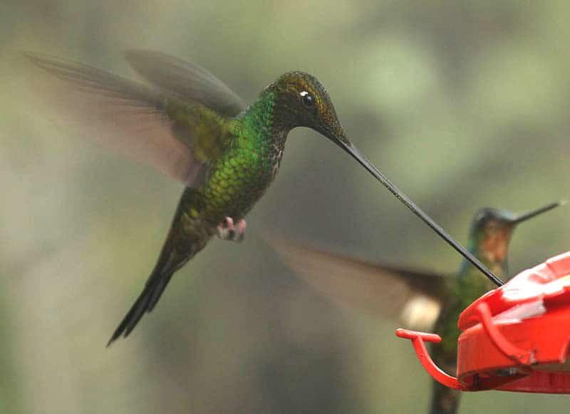 Die 45 prachtvollsten, schönsten und ungewöhnlichsten Vögel der Welt – Vogelbilder Galerie [+Videos] 35
