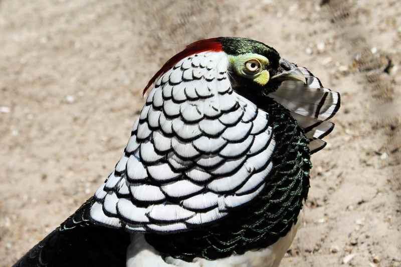Die prachtvollsten, schönsten und ungewöhnlichsten Vögel der Welt – Vogelbilder Galerie [+Videos] 13