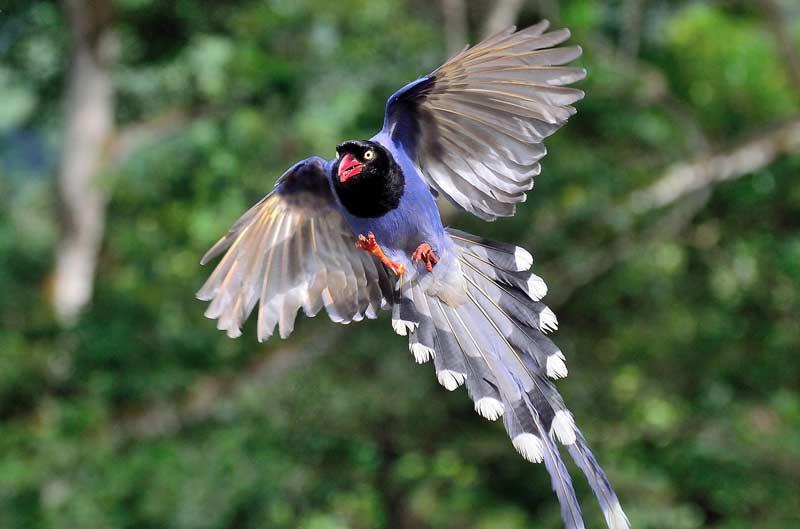 Die 45 prachtvollsten, schönsten und ungewöhnlichsten Vögel der Welt – Vogelbilder Galerie [+Videos] 12