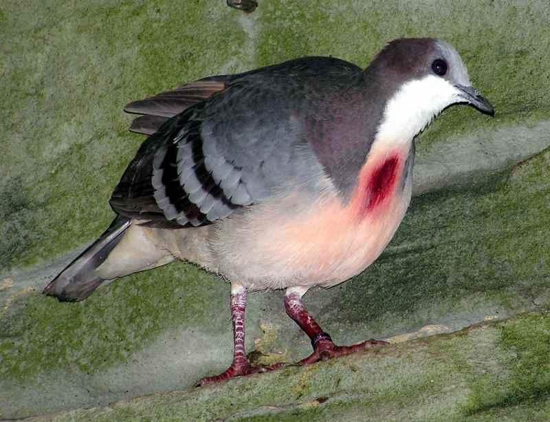 Die 45 prachtvollsten, schönsten und ungewöhnlichsten Vögel der Welt – Vogelbilder Galerie [+Videos] 14