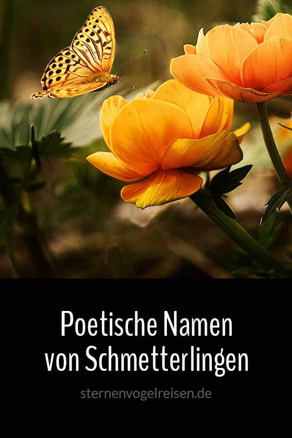 37 Poetische Namen von Faltern und Schmetterlingen