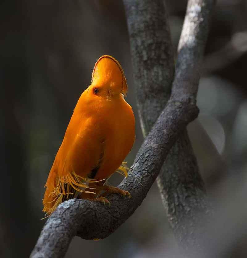 Die 45 prachtvollsten, schönsten und ungewöhnlichsten Vögel der Welt – Vogelbilder Galerie [+Videos] 19