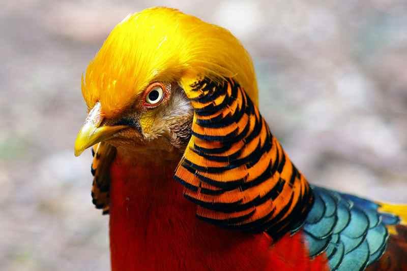Die 45 prachtvollsten, schönsten und ungewöhnlichsten Vögel der Welt – Vogelbilder Galerie [+Videos] 29