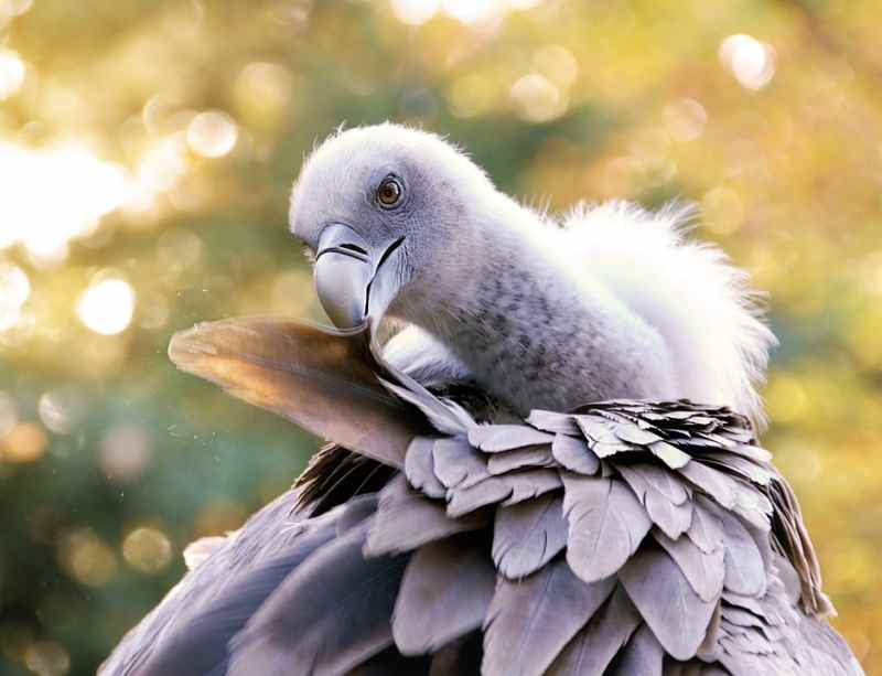 Die 45 prachtvollsten, schönsten und ungewöhnlichsten Vögel der Welt – Vogelbilder Galerie [+Videos] 10