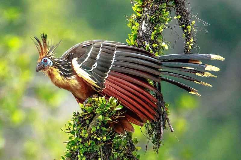 Die prachtvollsten, schönsten und ungewöhnlichsten Vögel der Welt – Vogelbilder Galerie [+Videos] 2