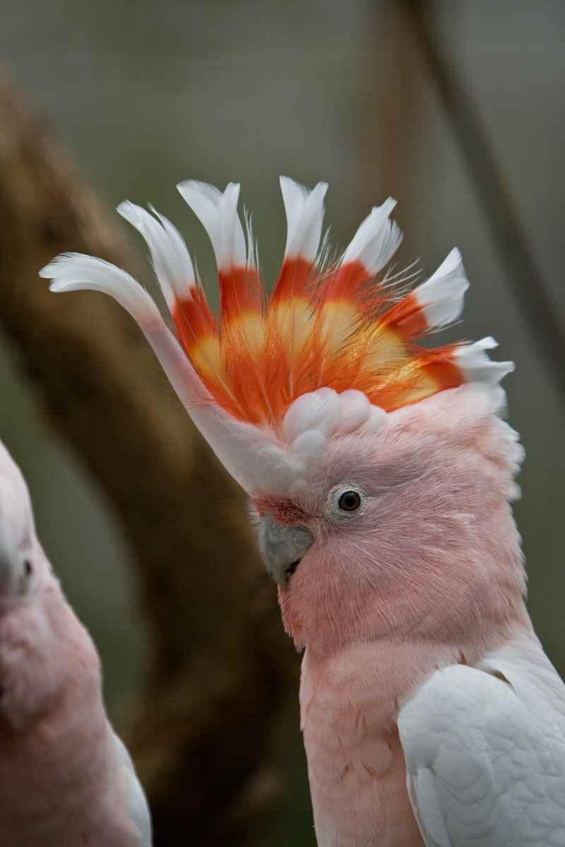 Die prachtvollsten, schönsten und ungewöhnlichsten Vögel der Welt – Vogelbilder Galerie [+Videos] 31