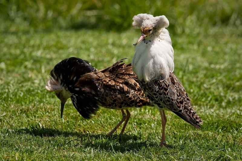 Die 45 prachtvollsten, schönsten und ungewöhnlichsten Vögel der Welt – Vogelbilder Galerie [+Videos] 21