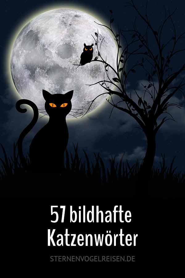 57 bildhafte Katzenwörter