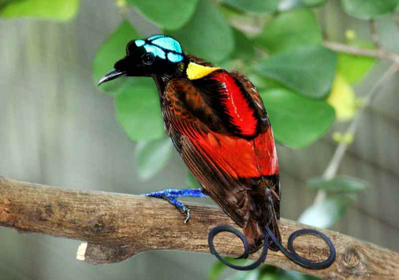 Die 45 prachtvollsten, schönsten und ungewöhnlichsten Vögel der Welt – Vogelbilder Galerie [+Videos] 4