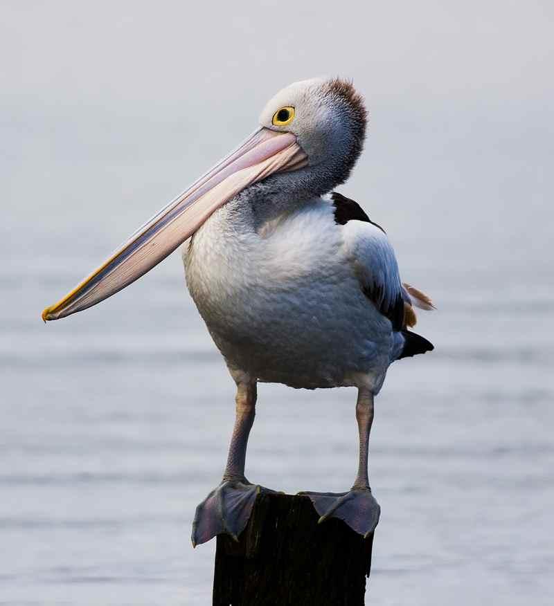 Die prachtvollsten, schönsten und ungewöhnlichsten Vögel der Welt – Vogelbilder Galerie [+Videos] 8