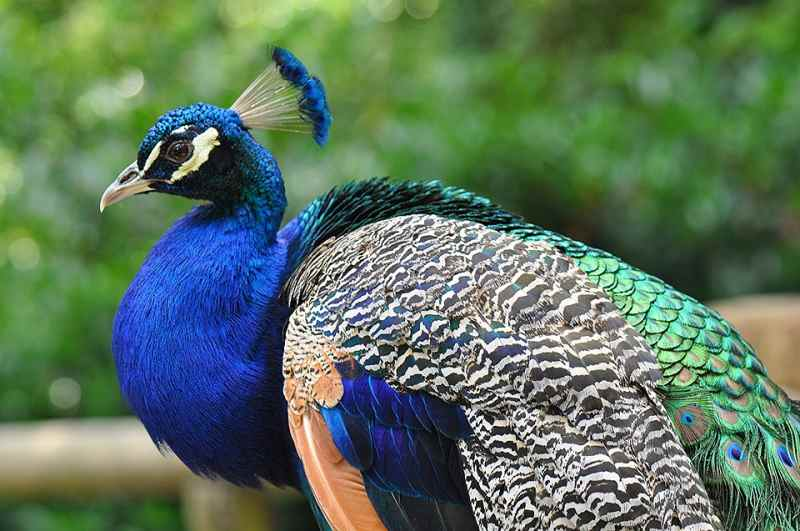 Die 45 prachtvollsten, schönsten und ungewöhnlichsten Vögel der Welt – Vogelbilder Galerie [+Videos] 7