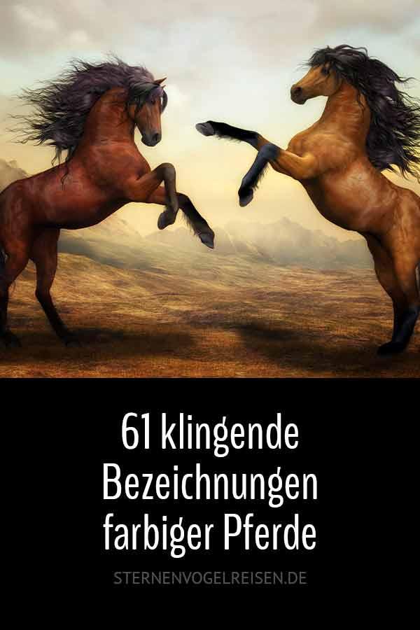 61 klingende Bezeichnungen farbiger Pferde