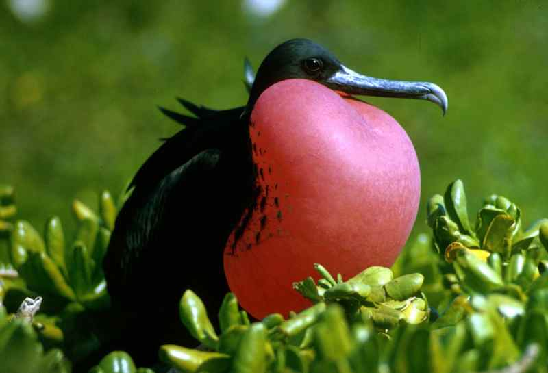 Die prachtvollsten, schönsten und ungewöhnlichsten Vögel der Welt – Vogelbilder Galerie [+Videos] 25