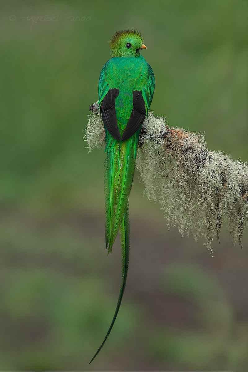 Die 45 prachtvollsten, schönsten und ungewöhnlichsten Vögel der Welt – Vogelbilder Galerie [+Videos] 15
