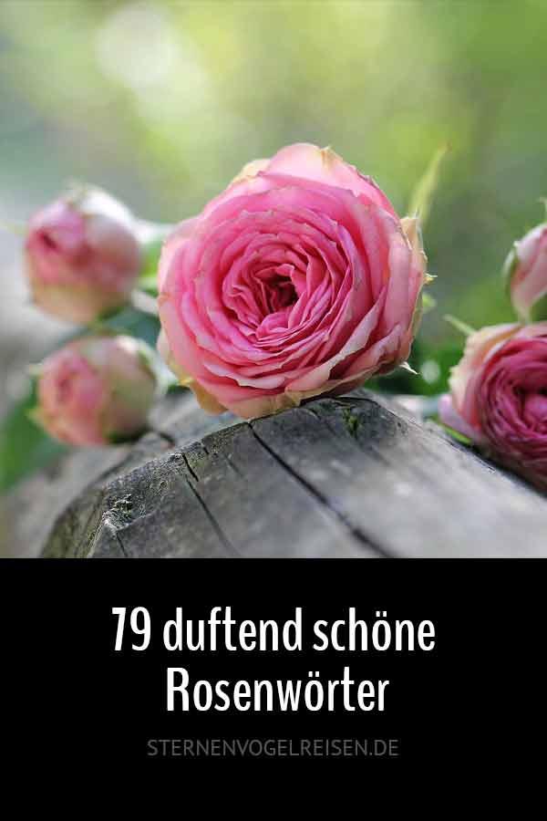 79 duftende Rosenwörter – Wörte mit Rose*