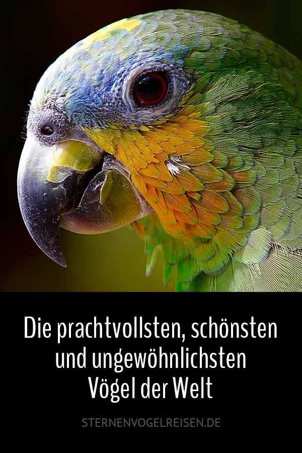 Die prachtvollsten, schönsten und ungewöhnlichsten Vögel der Welt – Vogelbilder Galerie + Videos