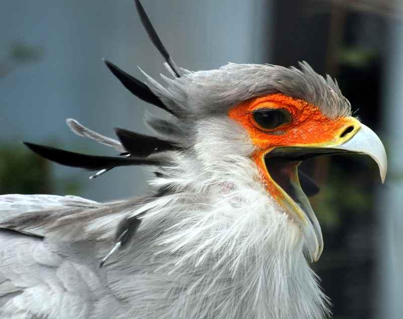 Die prachtvollsten, schönsten und ungewöhnlichsten Vögel der Welt – Vogelbilder Galerie [+Videos] 24