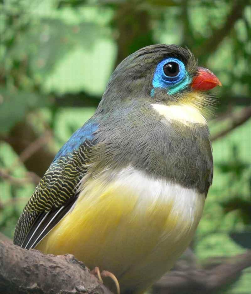 Die 45 prachtvollsten, schönsten und ungewöhnlichsten Vögel der Welt – Vogelbilder Galerie [+Videos] 23