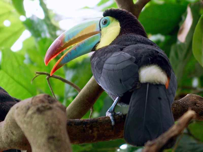 Die prachtvollsten, schönsten und ungewöhnlichsten Vögel der Welt – Vogelbilder Galerie [+Videos] 32