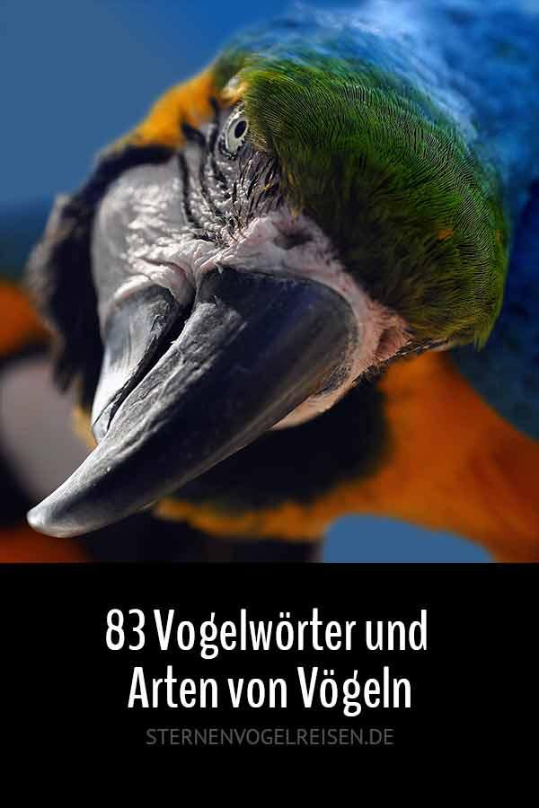 83 Vogelwörter und Arten von Vögeln