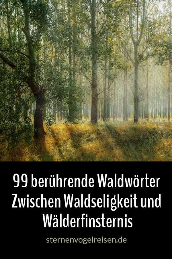 99 berührende Waldwörter – Zwischen Waldseligkeit und Wälderfinsternis
